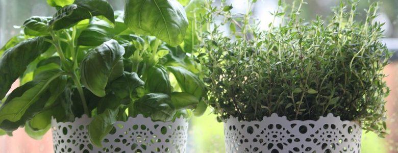 best herb garden kit