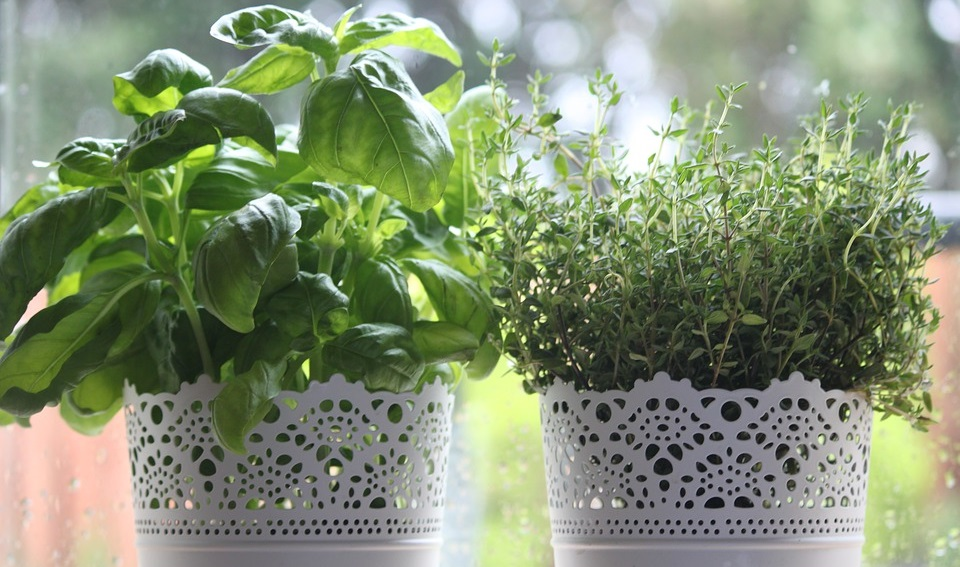 best herb garden kit